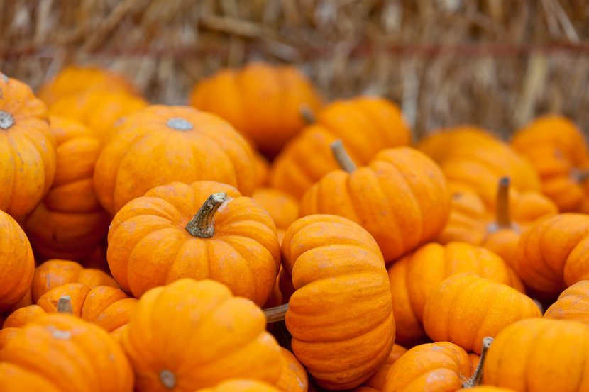 a bunch of pumpkins